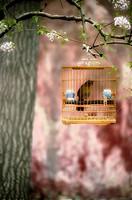 Birdcages,Concept