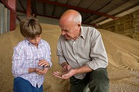 Farmer and grandson looking at wheat grains