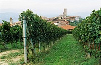 Gaja Vineyard, Barbaresco, Italy