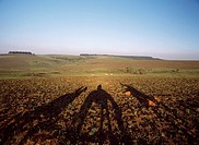 Shadows of horse riders at dusk, Nyika Plateau National Park, Malawi
