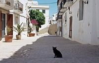 Street scene with black cat, Ibiza, Spain