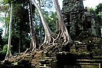 Rainforest growing over the ruins of Preah Paliliay tempel in the ancient city Angkor Thom, Cambodia