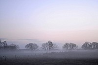 Evening fog above a field