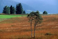 Switzerland, Europe, Canton Schwyz, hill bog of Rothenthurm, marshy landscape, trees, birches, mountains, mountain, na