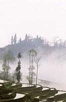 Rice terraces at Tea Mountain, Yuanyang County, Yunnan, China, Asia