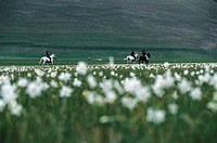 Riders on meadow, Monti Sibillini National Park, Italy