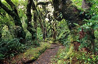 Rainforest at Mt Egmont National Park on the North Island, New Zealand
