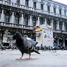 Newspaper man with bookstall and pigeons at St. Marks Square, Venice, Italy