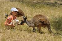 Cleland Wildlife Park, girl feeding kangaroo, Adelaide Hills, South Australia, Australia