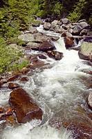 Running water beneath Pines as creek runs through Payette national Forest