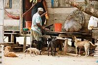 Tasbapauni, Nicaragua, Man cutting turtle meat