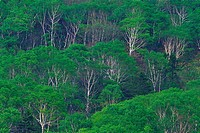 Trees in the Forest, High Angle View