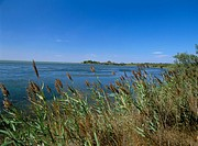Etang du Vaccares, Camargue region, Bouches_du_Rhone, France, Europe
