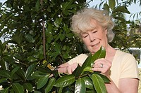 Close_up of a senior woman gardening