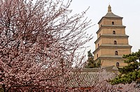 Great Wild Goose Pagoda Dayanta built during the Tang Dynasty in the 7th century, Xian, Shaanxi, China, Asia