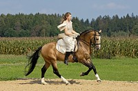 Girl wearing a historic dress riding canter on a Lusitano horse stallion