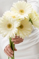 Woman holding white gerberas