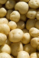 Full Frame of Small White Potatoes