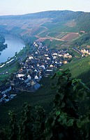The wine village of Ürzig, Mosel_Saar_Ruwer, Germany