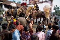 Crowds watch elephants in town in Kerala state, India, Asia