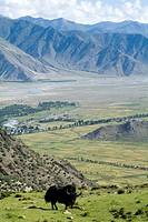 Yak, Ganden Monastery, near Lhasa, Tibet, China, Asia