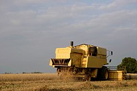 combine harvester in oat field