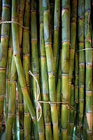 Close_up of bundles of sugar cane in Mexico, North America