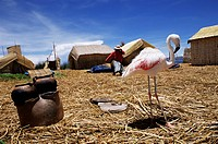 Flamingo sharing life with indigenous Uros people on floating island, Floating Islands, Lake Titicaca, Peru, South America