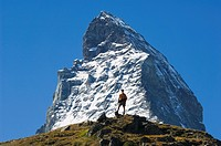 Hiker below the peak of the Matterhorn, 4477m, Zermatt Alpine Resort, Valais, Switzerland, Europe