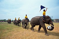 Line of elephants in a soccer team during the November Elephant Round_up Festival at Surin City, Thailand, Southeast Asia, Asia