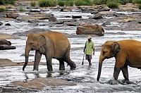 Elephant orphanage, Pinnawala, Sri Lanka