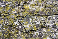 Rock and moss (thumbnail)