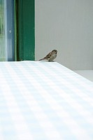 Bird perched on corner of table