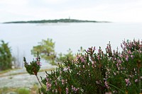 Purple flowering shrub, close-up, sea in background