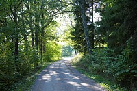 Dirt road through wooded countryside