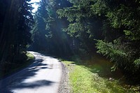 Sunlit road through forest