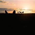 Tre Får Och Två Resta Stenar I Siluett Mot Kvällshimmel, Öland, Sheep On Hill By Sky