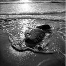 En Våg Sköljer Över Två Sten Som Ligger Nedsjunken I Sanden På En Sandstrand, Stone On Beach B&W