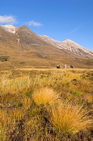 Crofters cottage ruin on the lower slopes of Beinn Eighe in the national nature reserve near Loch Torridon, Wester Ross, Scotland, United Kingdom, Eur...