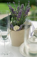 Champagne Glasses next to a Flower Pot with Lavender _ Festivity _ Decoration _ Beverages