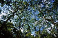 Trees in Bryant Park, New York City, New York, USA, North America