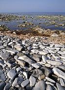 Strand vid Hoburgen, södra Gotland, Stones on beach