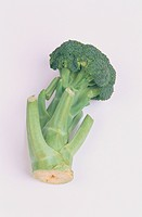 Stem Of Broccoli