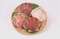 Scallop Shells On Plate