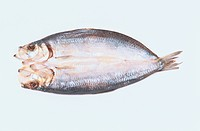 Halved Herring