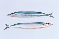 Two Pacific Sauries
