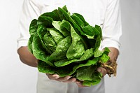Chef holding romaine lettuce mid section