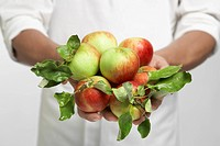 Chef holding fresh apples mid section