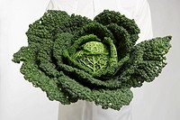 Chef holding kale close_up