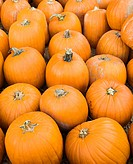 Group of pumpkins sitting on ground at farmers market